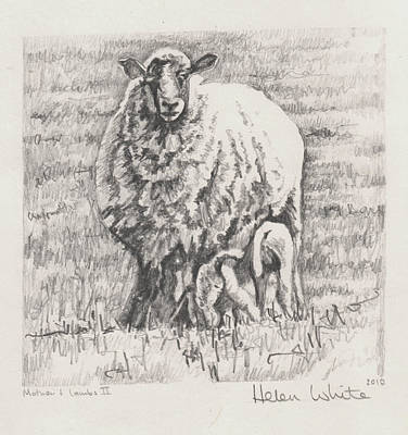 Drawing - Mother And Lambs by Helen White
