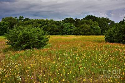 Kim Fearheiley Photography - Mother Neff Wildflowers by Dennis Nelson