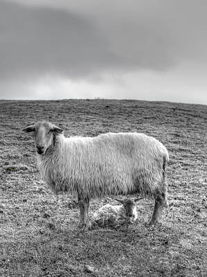Photograph - Mother Sheep And Baby Sheep by Pics4u