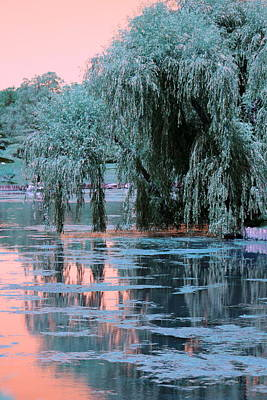 Mother Willow Infrared Art Print