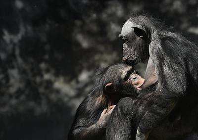 Photograph - Motherhood 2 by Fraida Gutovich