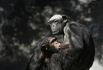 Photograph - Motherhood 3 by Fraida Gutovich