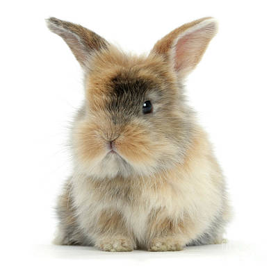 Photograph - Motley Love Bunny by Warren Photographic