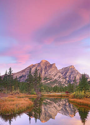 Photograph - Mount Kidd And Trees Reflected In Pond by Tim Fitzharris/ Minden Pictures