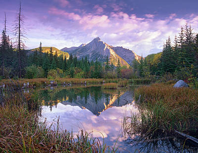 Photograph - Mount Lorette And Spruce Trees by Tim Fitzharris/ Minden Pictures
