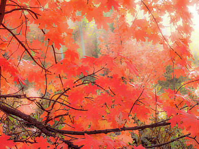 Mountain Maple Color Art Print by Leland D Howard