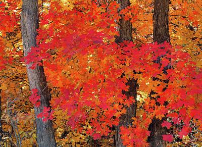 Photograph - Mountain Maple Tree by Leland D Howard