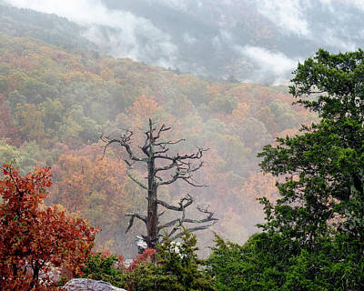 Grateful Dead - Mountain Mist by James Barber