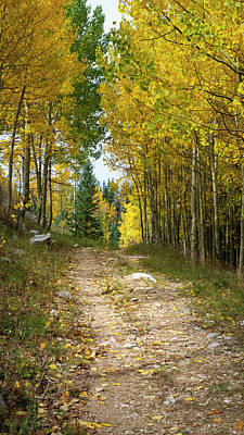 Photograph - Mountain Road In Autumn by Mary Lee Dereske