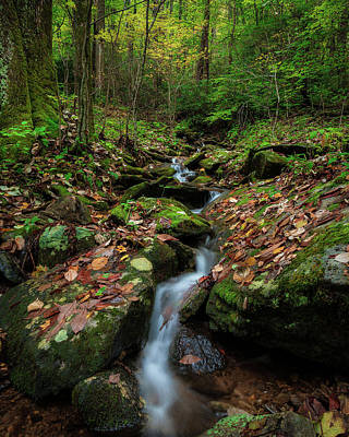 Mountain Stream - Blue Ridge Parkway Art Print