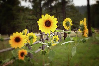 Photograph - Mountain Sunflowers by Rick Furmanek