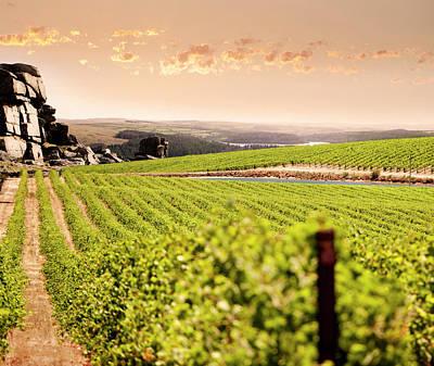 Photograph - Mountain Vineyard by Lockiecurrie