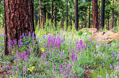 Photograph - Mountain Wildflowers by Dawn Richards