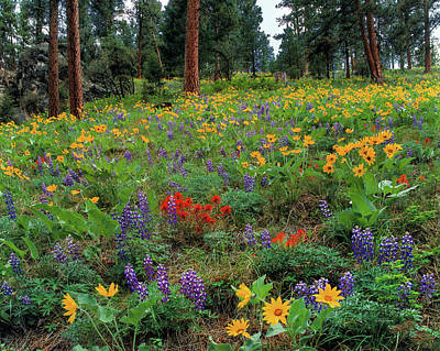 Photograph - Mountain Wildflowers by Leland D Howard