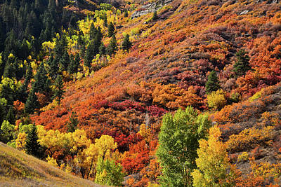 Photograph - Mountainside Colors Along Highway 133 South Of Mcclure Pass by Ray Mathis