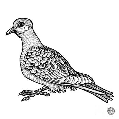 Drawing - Mourning Dove by Amy E Fraser