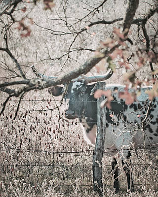 Photograph - Movember Cow by Philip A Swiderski Jr