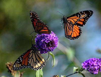 Louis Armstrong - Move Over Because Here I Come - Monarch by Cindy Treger