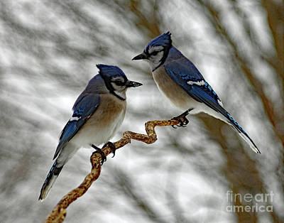 Birds Rights Managed Images - Mr And Mrs Blue Jay Having A Family Spat Royalty-Free Image by Cindy Treger