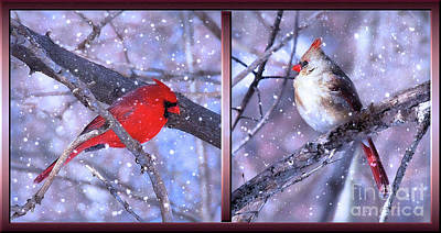 Photograph - Mr And Mrs Cardinal  by Elaine Manley