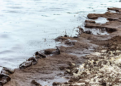 Photograph - Muddy Seashore by Silvia Marcoschamer
