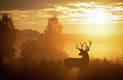 Photograph - Mule Deer In The Sunrise by Philip Rispin