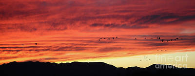 Photograph - Mule Mountains Sunset by Jean Clark