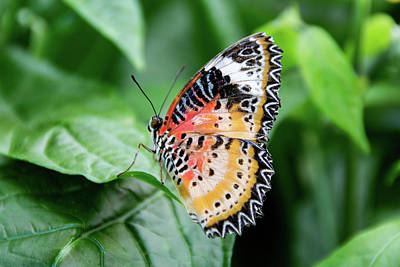 Photograph - Multi Colored Butterfly by Jennifer Wick