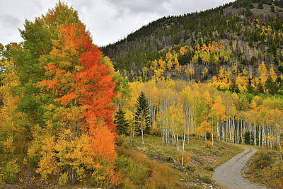 Photograph - Multicolored Aspens Along Last Dollar Road by Ray Mathis