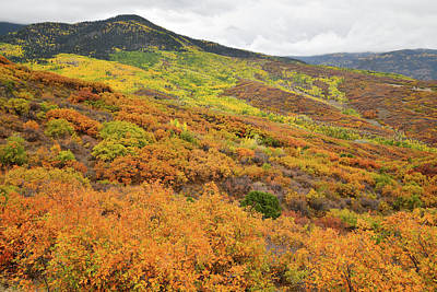 Photograph - Multicolored Fall Colors En Route To Owl Creek Pass by Ray Mathis