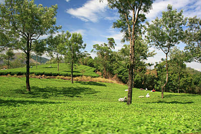 Kerala Photograph - Munnar,kerala,india by Sachin Polassery