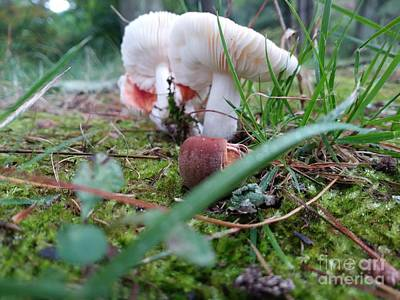 Photograph - Mushrooms And Moss  by Reina Resto
