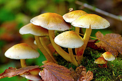 Photograph - Mushrooms On The Forest Floor by Sharon Talson