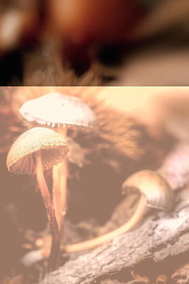 Photograph - Mushrooms by Roberto Pagani