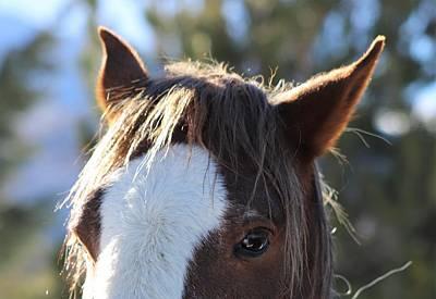 Photograph - Mustang Close Up by Sagittarius Viking