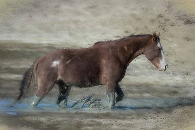 Photograph - Mustang Getting Out Of A Muddy Waterhole The Slow Way Painterly by Belinda Greb