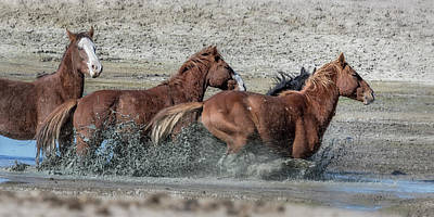 Photograph - Mustangs Getting Out Of A Muddy Waterhole The Fast Way by Belinda Greb