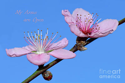 Photograph - My Arms Are Open by Kaye Menner
