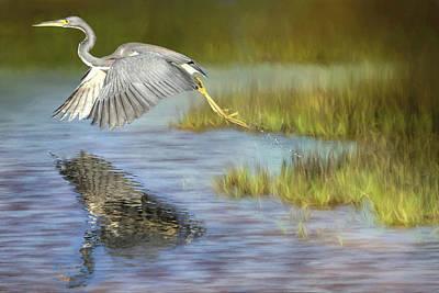 Tri Wall Art - Photograph - My Blue Heron by Donna Kennedy