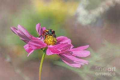 Photograph - My Flower by Susan Warren
