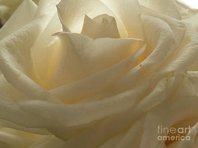Photograph - My Sister's Rose 1 by Christy Garavetto