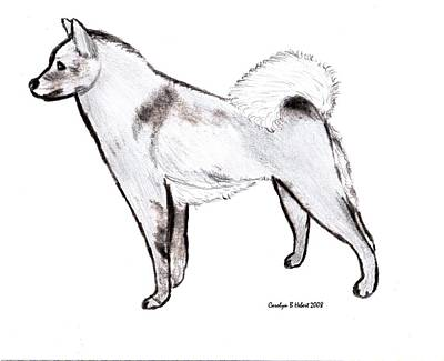 Wall Art - Drawing - My Sketch Of Finnish Spitz by Carolyn Hebert