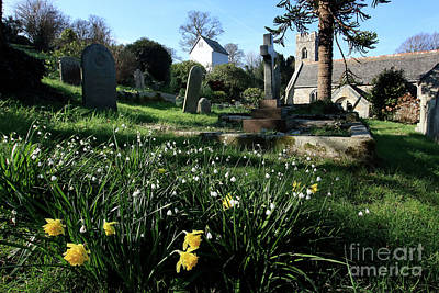 Photograph - Mylor Churchyard Spring Flowers by Terri Waters