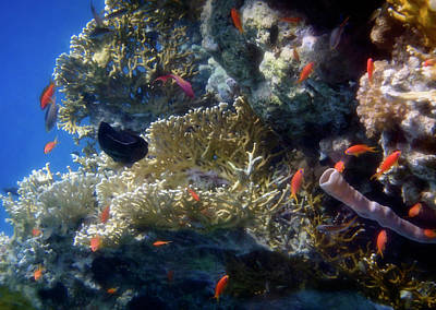 Photograph - Mysterious And Beautiful Red Sea Underwater World by Johanna Hurmerinta