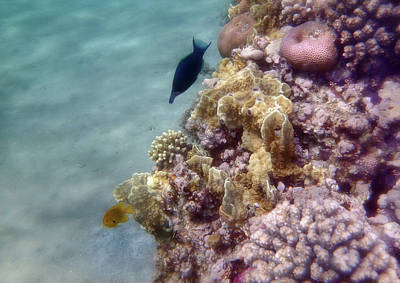 Photograph - Mysterious And Exciting Red Sea Underwater World by Johanna Hurmerinta
