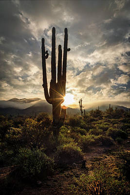 Photograph - Mysterious Saguaro Sunrise  by Saija Lehtonen