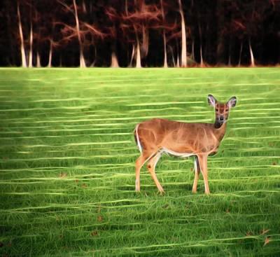 Photograph - Mystic Deer by Karen Silvestri