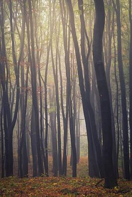 Latidude Image - Mystic Woodland by Tobias Luxberg