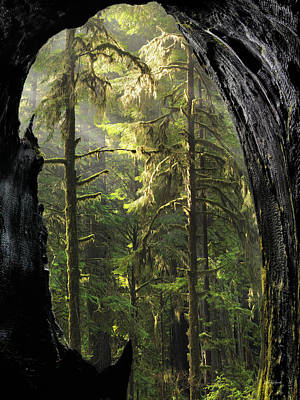 Photograph - Mystical Forest Opening by Leland D Howard