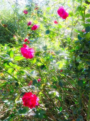 Photograph - Mystical Rosebush In The Desert by Judy Kennedy